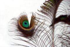 Piume del pavone Fotografie Stock