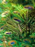 Piume del pavone di priorità bassa Fotografia Stock