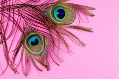 Piume del pavone sul colore rosa fotografie stock