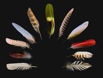 Piume della raccolta degli uccelli Immagini Stock Libere da Diritti