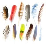 Piume di penna della raccolta degli uccelli Immagini Stock Libere da Diritti