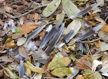 Piume di uccello Fotografia Stock