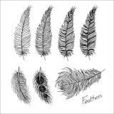 Piume di uccello disegnate a mano Stile di Boho Fotografia Stock Libera da Diritti