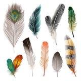 Piume di uccello messe Immagini Stock