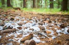 Piume di uccello sparse Fotografia Stock
