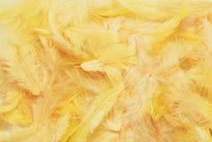 Piume gialle Fotografia Stock