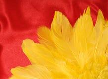 Piume gialle su colore rosso Fotografia Stock