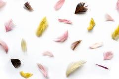 Piume multicolori Fotografia Stock Libera da Diritti