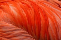 Piume rosa del fenicottero fotografie stock