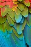 Piume variopinte del Macaw Fotografie Stock