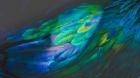 Piume verde smeraldo Fotografia Stock Libera da Diritti