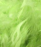 Piume verdi Fotografia Stock Libera da Diritti
