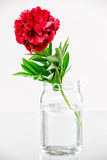 Pivoine dans un vase en verre avec de l'eau Image stock