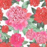 Pivoine rose et orange Configuration sans joint Photo libre de droits