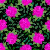 Pivoine rose Pattern5 sans couture Photo libre de droits