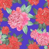 Pivoine rose Pattern6 sans couture Photo stock