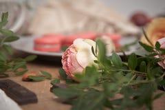Pivoine rose rose et macarons Image stock