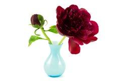 Pivoine rouge avec le vase bleu images stock