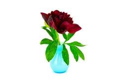 Pivoine rouge dans le vase bleu photographie stock
