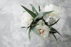 Pivoine sur un fond de marbre, photographié pendant la journée Image libre de droits