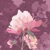 pivoines Photo stock