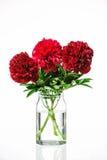 Pivoines dans un vase en verre avec de l'eau Images libres de droits