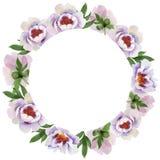 Pivoines doucement roses Fleur botanique florale Place d'ornement de frontière de vue illustration libre de droits