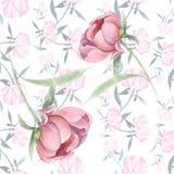 Pivoines - fleurs et feuilles Composition décorative sur un fond d'aquarelle Motifs floraux Configuration sans joint Photos libres de droits