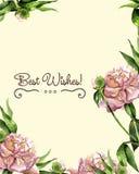 Pivoines florales de carte d'aquarelle Illustration botanique Photographie stock