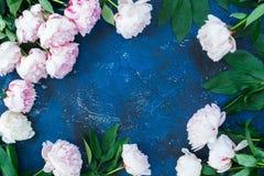 Pivoines fraîches sur le bleu Photographie stock