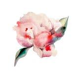 Pivoines peintes à la main d'aquarelle watercolor Photo stock
