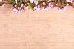Pivoines renversantes sur le fond en bois Images stock