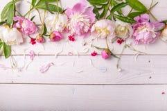Pivoines roses renversantes sur le fond en bois rustique blanc Copiez l'espace Photographie stock libre de droits