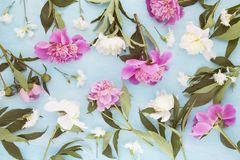 Pivoines roses photo stock