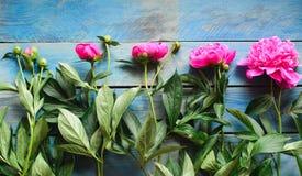 Pivoines roses sur une table bleue Images stock