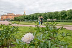 Pivoines sur The Field de Mars St Petersburg Russie Photo stock