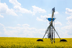 Pivot in Canola Field Stock Image