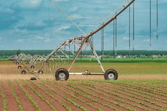Pivot irrigation system in cultivated soybean and corn field royalty free stock photo
