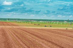 Pivot irrigation system in cultivated soybean and corn field stock photos