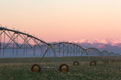 Pivot Irrigation System with Mountain Range in background. Pivot Irrigation System with the Colorado Mountain Range in background at sunrise stock images