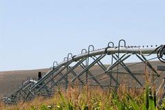 pivot kukurydzani wierzchołki Obrazy Stock