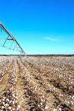 Pivot over Cotton Field Ready to Harvest Stock Images