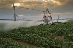 Pivoting irrigation system Stock Photo
