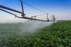 Pivoting irrigation system. Center pivoting irrigation system over a ripe cotton field Royalty Free Stock Photography