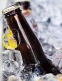 Piwna butelka na lodzie Fotografia Royalty Free