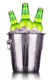 Piwne butelki w lodowym wiadrze odizolowywającym fotografia royalty free