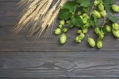 Piwnego piwowarstwa składników chmielu rożki i pszeniczni ucho na ciemnym drewnianym stole Piwny browaru pojęcie tła piwo zawiera Fotografia Royalty Free