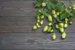 Piwnego piwowarstwa składników chmielu rożki na ciemnym drewnianym stole Piwny browaru pojęcie tła piwo zawiera gradientową siatk Zdjęcia Royalty Free