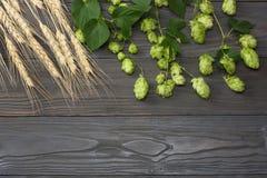 Piwnego piwowarstwa składniki Podskakują i pszeniczni ucho na ciemnym drewnianym stole Piwny browaru pojęcie tła piwo zawiera gra Fotografia Stock