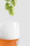 piwny chmielu Fotografia Royalty Free